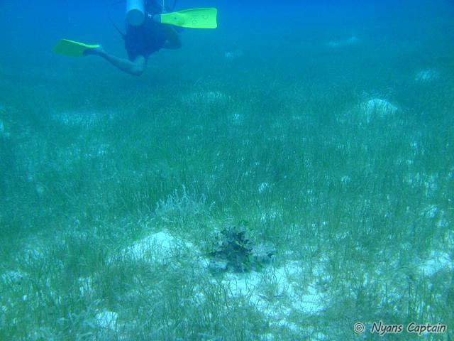 海底の草原のような