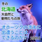 2/7 冬の北海道 大自然と動物たちの旅
