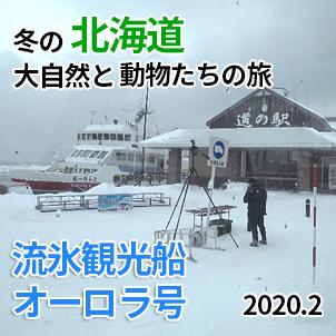 流氷観光船オーロラ号