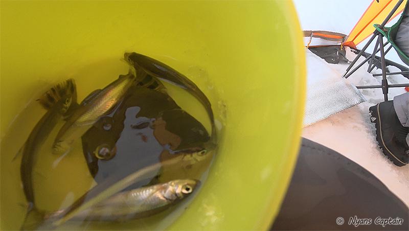 釣り始めて30分くらいの釣果