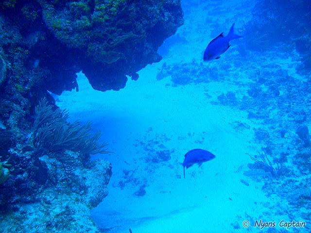 さんご礁が広く広がっている