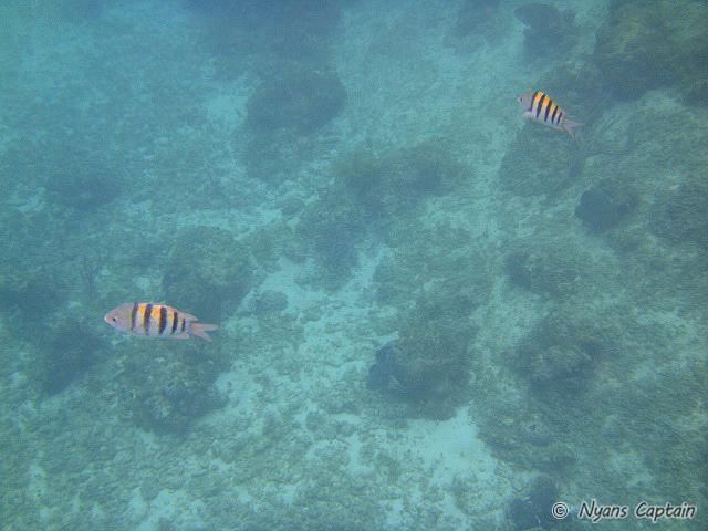 カリブ海のお魚