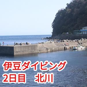 3/21 伊豆のダイビング 北川ファンダイビング